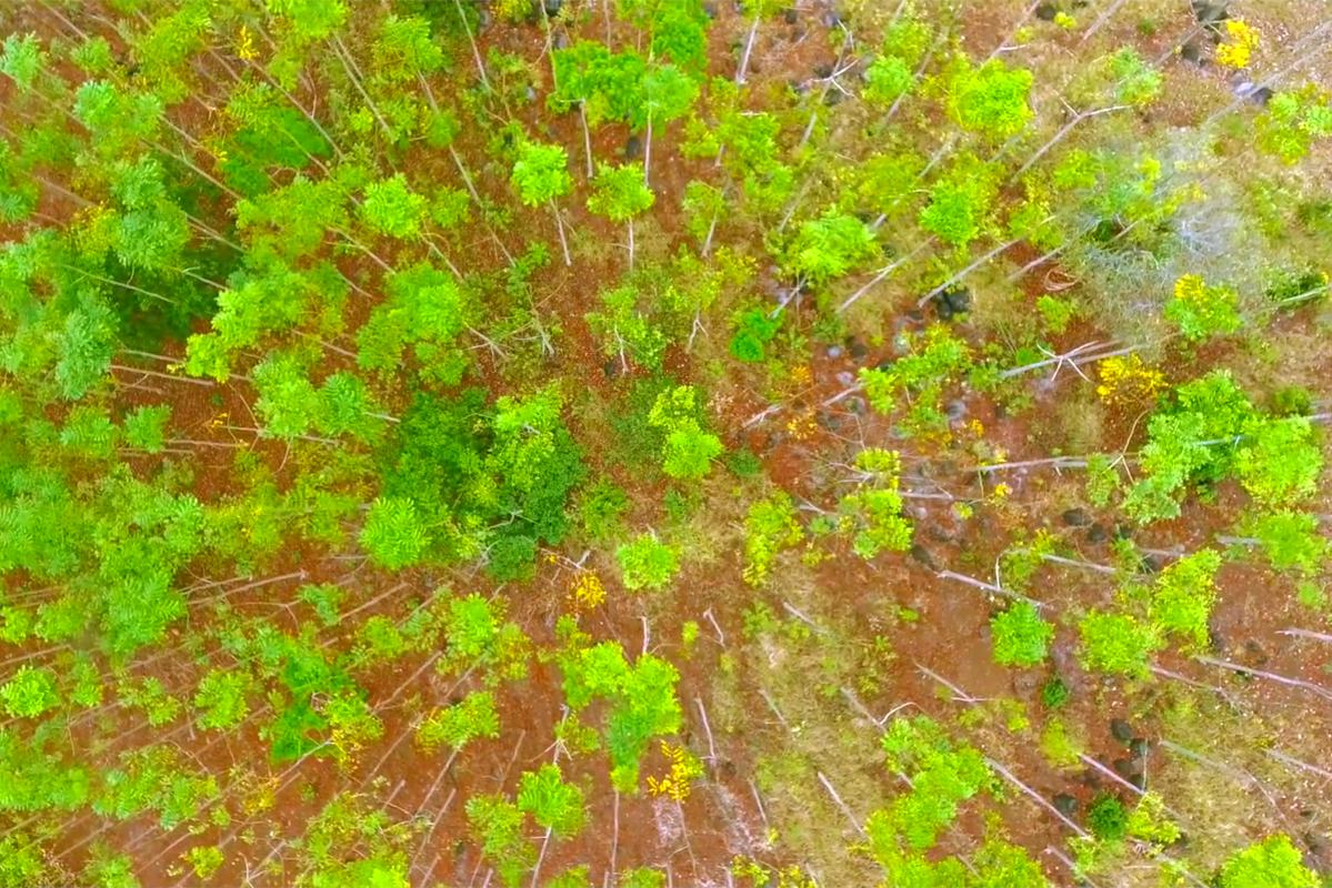 Vista aerea de predio reforestado. Los Tuxtlas, Veracruz.