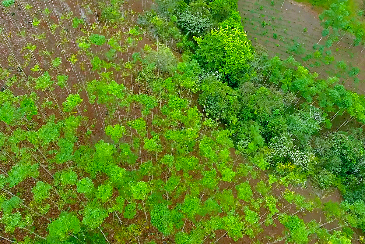 Reforestación, Los Tuxtlas. Veracruz.