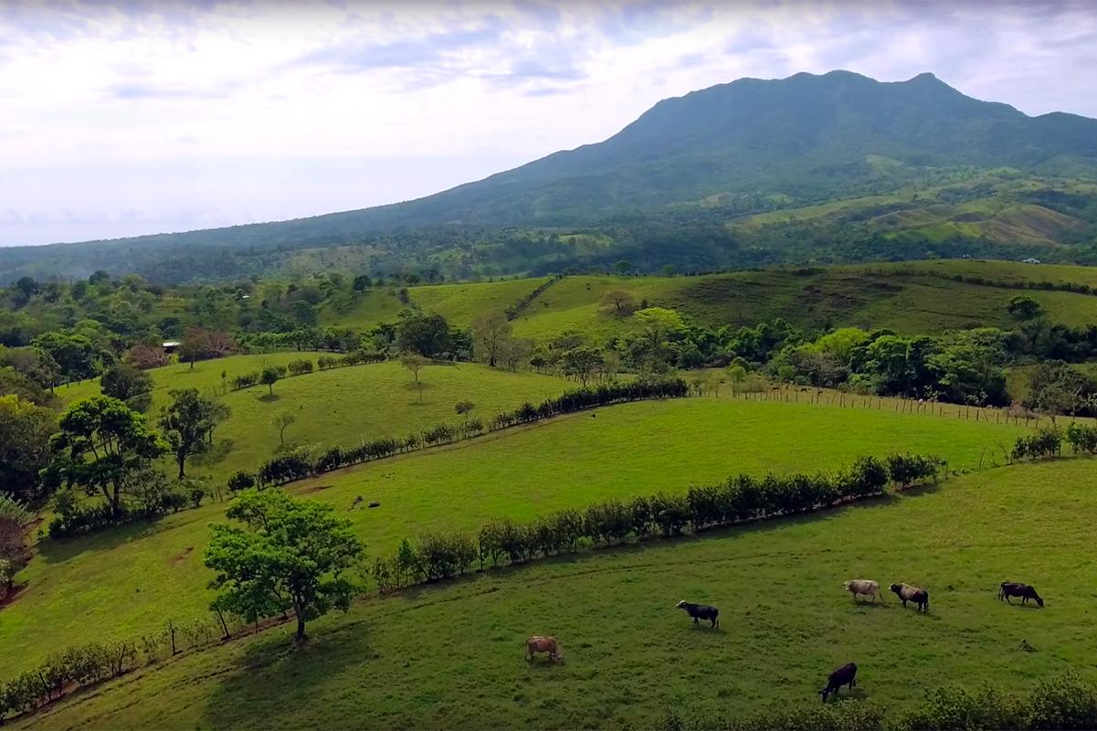 Cercos vivos y rotación de ganado en Los Tuxtlas, Veracruz.