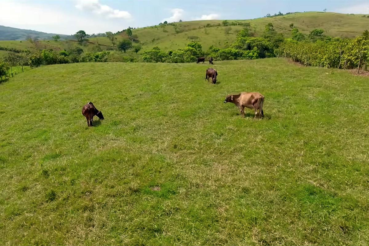 Rotación de ganado. Los Tuxtlas, Veracruz.