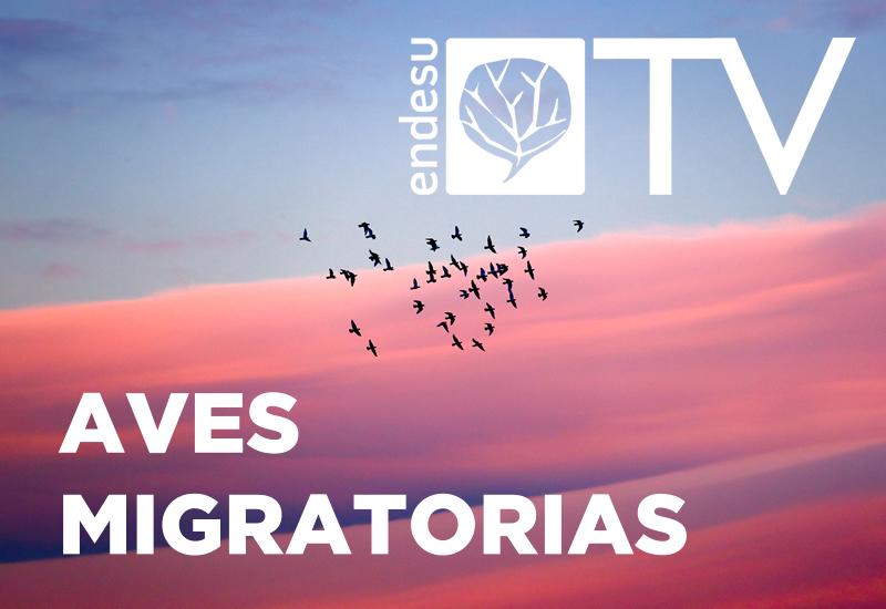 ENDESU.TV